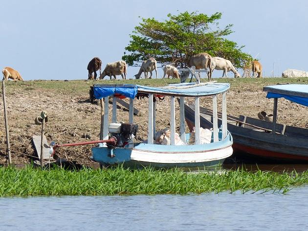 Animais e barcos Canal do Jari