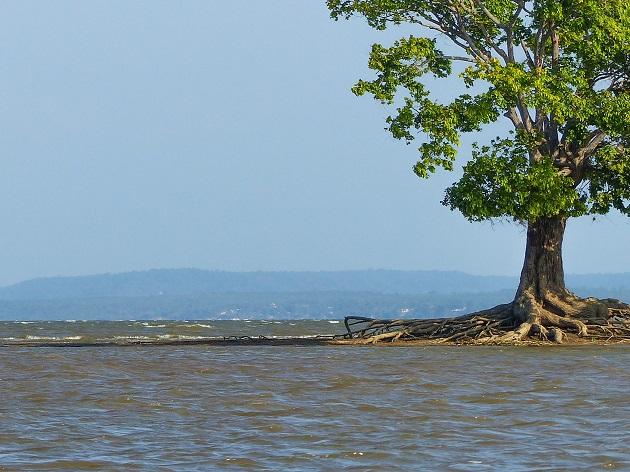 Canal do Jari Tajapós