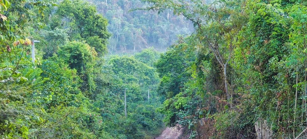 Floresta Nacional do Tapajós, Pará: como ir de Santarém e Alter do Chão