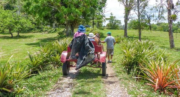 Turismo em fazenda de cacau