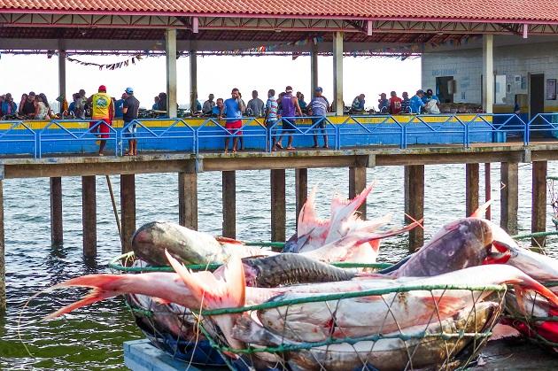 Mercado do Peixe de Santarém