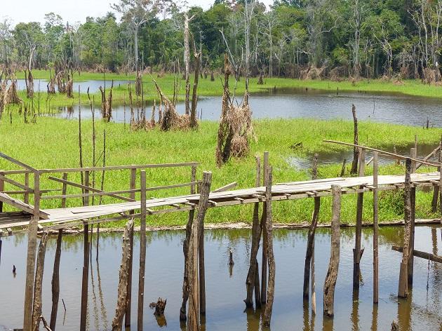 O que fazer em Manaus 5