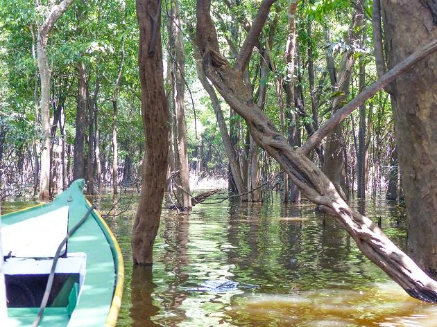 O que ver em Manaus