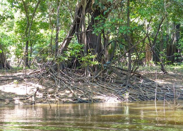 Passeios de barco em Manaus3