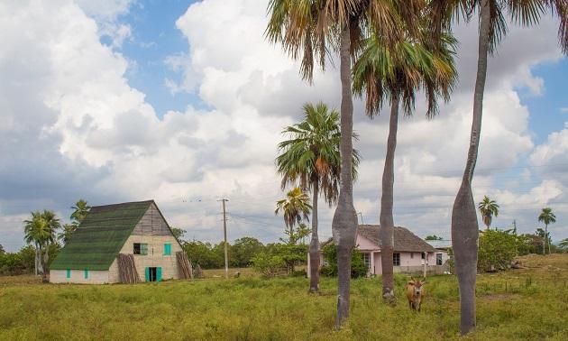 Palmeiras de Cuba