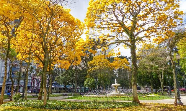 Pontos Turísticos de Curitiba II