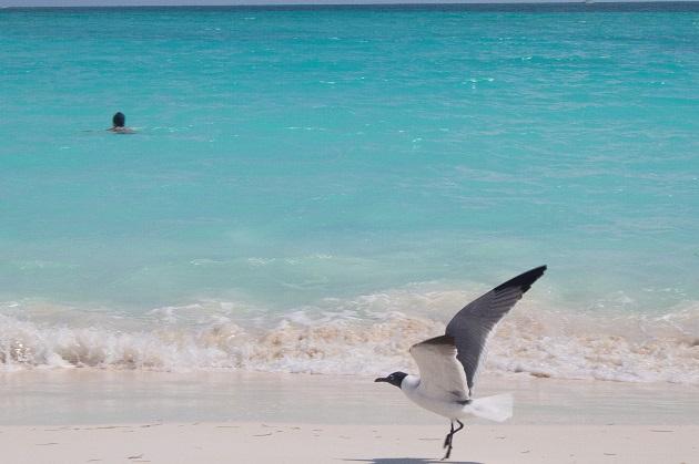 Praia de Cayo Largo.