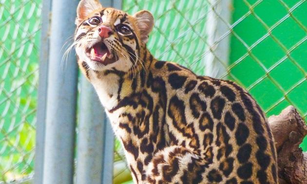 Zoológico de Manaus
