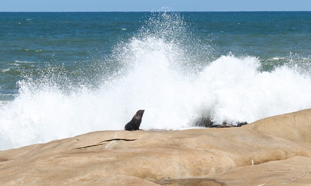 lobo-marinho-cabo-polonio