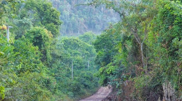 A Flona Tapajós é uma das mais conservadas das 55 Florestas Nacionais da Amazônia Brasileira. Fica no Pará, com acesso por terra a partir de Santarém.