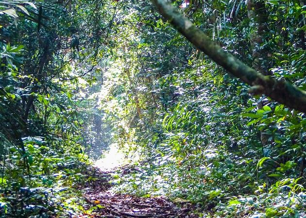 Passeio e trilha pela Floresta Nacional do Tapajós