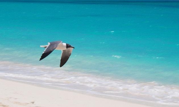 As melhores praias de Cuba: Varadero ou Cayo Largo?